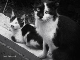 my cats by behroozR