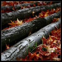 Autunno 2009 by salvaterra by SixbySix