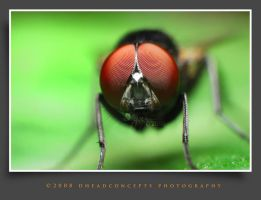 housefly7 by dhead