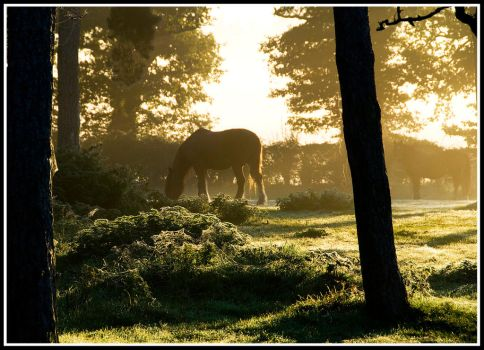 Horse with no Name by Lightfoot11