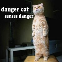 danger cat by doom1272