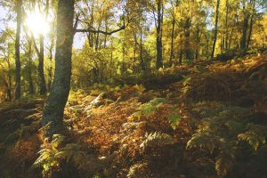 Birch woodland, Scotland by younghappy
