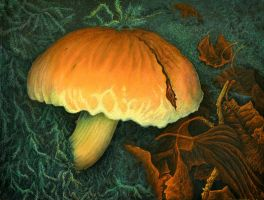 Bright and mysterious hypholoma by AldemButcher