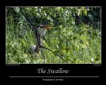 The Swallow by Merlinstouch