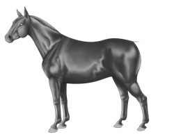 Free horse greyscale by Wakimi