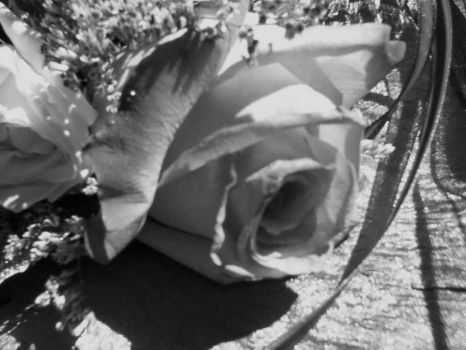 black and white rose by thereforthosewhocare