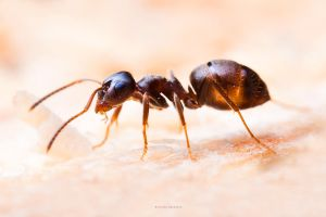 Ant by DREAMCA7CHER