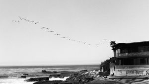 why birds fly east by redgreenboo