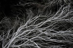 Twisting Branches by LDFranklin