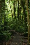 Jungle Walkway 1 by RaeyenIrael-Stock