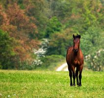 in the pasture by jenah