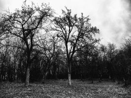 Naked Trees II. by Activvv