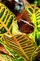 Unknown Butterfly by ParadoxGirl411