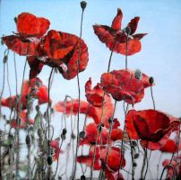 poppies by naglets