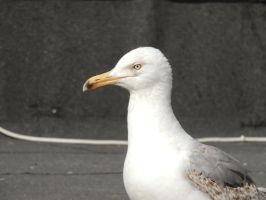 proud seagull by exit-humanity