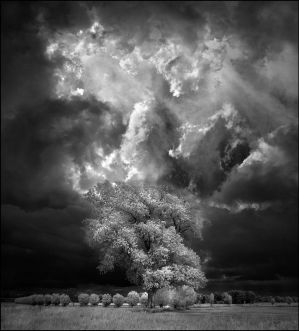 Home Tree VII infrared... by MichiLauke