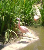Oregon 2009 - Flamingos by DarlingMionette