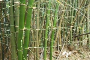 Bamboo XXIV by KW-stock