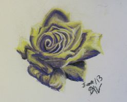 Yellow and Purple rose by LadyKylin