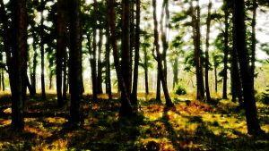 Forest by pgSemen