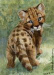 ACEO Cougar Cub by sschukina