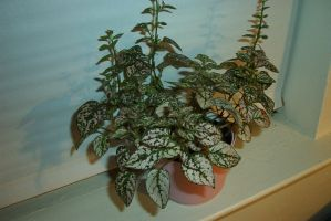 plant on window-blinds closed by xoet