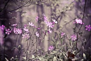SPRING PHLOX by ryan432