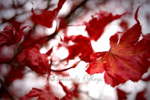 red leaves3 by firstkissfeelings