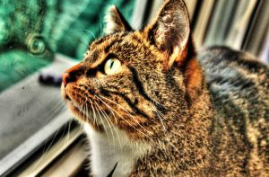My cat crumb HDR by PPFotografie