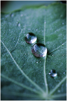 Water Droplets on the Green by Eternal-Polaroid