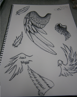 wing study by Shinigami-cat