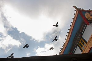 Pigeons and a monastery by bingbing51
