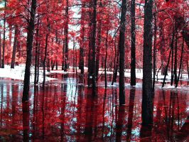 Blood Forest by C-Zavala