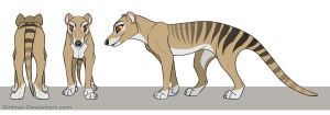 Thylacine by Key-Feathers