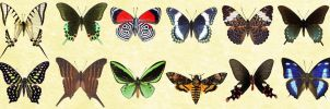 Mac Icons - Butterflies Set 1 by Nastino47