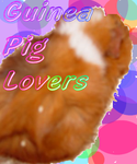 Guinea Pig Lovers Contest by SkiingBunni