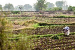 Farmer at work by SureshKhaire