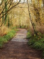 Wood Path Stock 1 by Idle-Emma-Stock