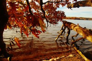 Fall-Scape 3 by nazzara