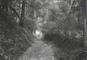 Storming Pagan Paths by slaveofthelivingdead