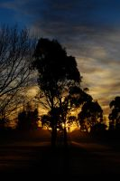 Morning Tree by mark-flammable