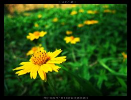 Sunshine by krishnachandranu