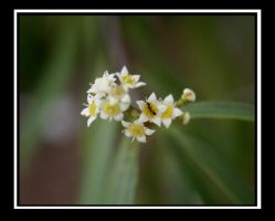 Anty Flowers 2 by shelly349