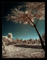 IR Road. by pleautaud