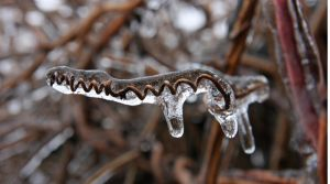 Deep Freeze II by ocularimages