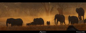 Migration by Bahaloo
