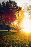 Autumn Id by MyLifeThroughTheLens