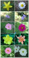 Flowers Pack - Stock by BaB-Jane