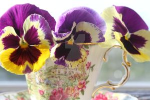 PANSIES IN CHINA by GeaAusten