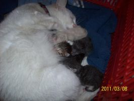 My baby kittens 3 by Katy500